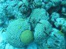 Wunderbare Unterwasserwelt